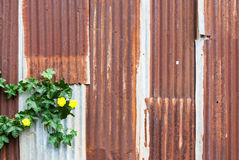 Rusty Corrugated Metal Sheet with Yellow Flower Background/ Texture Royalty Free Stock Photo