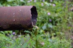 Rusty Drain Pipe mit Algen Lizenzfreie Stockfotos