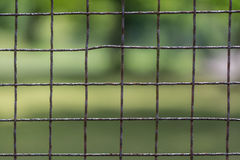 Rusty fence from mesh. Old wire enclosure with blurred greenery in the background Stock Photography