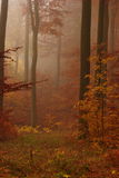 Rusty forest in autumn foggy morning Stock Photography