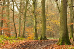 Rusty forest in the late autumn Stock Photos