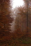 Rusty forrest and morning fog. Picture of autumn scenery, golden leaves and morning fog Royalty Free Stock Photo