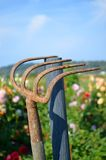 Rusty garden rake Royalty Free Stock Photography