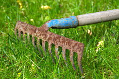 Rusty garden rake on grass Stock Image