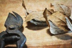 Rusty garden scissors Stock Photos