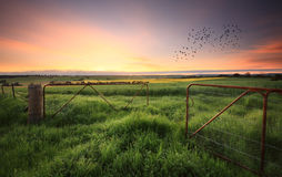 Rusty gates open to wheat and canola crops Stock Images
