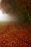 Rusty golden leaves and morning fog Royalty Free Stock Image