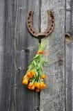 Rusty horseshoe and calendula herb bunch on wall Stock Image