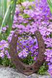 Rusty horseshoe in front of a lots of purple spring flowers Stock Photography