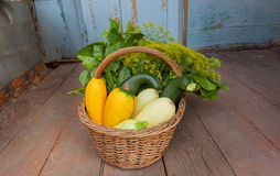 Rusty house with season basket and ripe organic vegatables, zucchini and greens. Gardener harvest during autumn time Royalty Free Stock Image