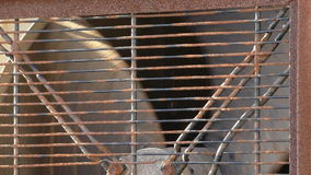 Rusty industrial ventilator fan close up. Close up of industrial fan blades rotating slowly behind rusty protection cover outside stock video footage