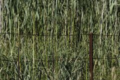 Great Marico River Source Perimeter Fence. Rusty iron fence perimeter surrounding a wetland at the source of the Great Marico river, North West Province, South Stock Image