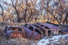 Rusty junk cars Stock Image