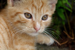 Rusty kitten Royalty Free Stock Image