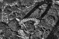 Rusty Klipp für alte Betonplatten mit Moos, Hintergrund im Freien Lizenzfreie Stockfotografie
