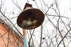 Rusty lantern with electric light bulb in spring Stock Photo