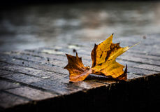 Rusty leaf. On wet sidewalk blowing in the wind stock images