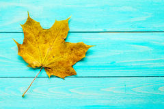 Rusty leaf over blue wooden background Royalty Free Stock Photography