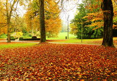 Free Rusty Leaves Of Autumn Stock Image - 46300891