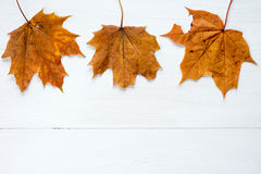 Rusty leaves over wooden background with copy space Royalty Free Stock Photos
