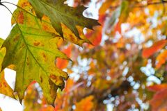 rusty-leaves-in-the-park Royalty Free Stock Images