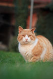 Rusty lovely cat relaxing on the huge botanic garden during beau Royalty Free Stock Photos