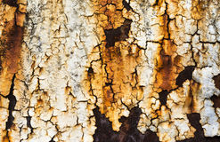 Rusty metal background with streaks of rust. Royalty Free Stock Image