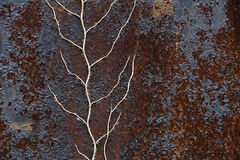 Rusty metal and a dead plant background Stock Image