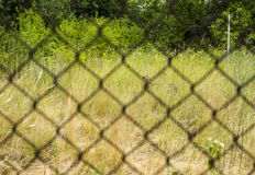 Rusty metal grille fence macro and nature defocused Royalty Free Stock Image