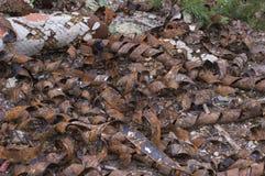 Rusty Metal Heap fotos de stock