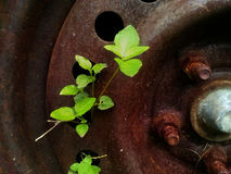 Rusty metal with holes and a plant growing up through the orifices Stock Photography