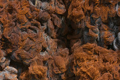 Rusty Metal Net Texture royaltyfri bild