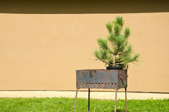Rusty metal portable grill and spruce grow in pot Stock Photo