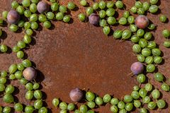 Rusty metal surface background with some fresh gooseberry and plums. Empty space royalty free stock photos
