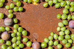 Rusty metal surface background with some fresh gooseberry and plums. Empty space royalty free stock images