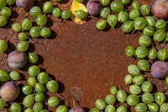 Rusty metal surface background with some fresh gooseberry and plums. Empty space stock photos