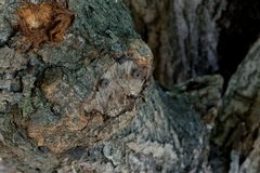 Rusty nail on tree trunk for concept background stock photo