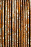 Rusty nails next to each other in strait line Royalty Free Stock Photography
