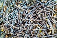 Rusty Nails, Staples, parafusos Imagens de Stock