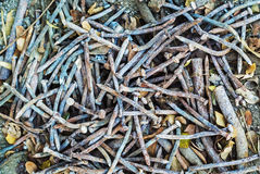 Rusty Nails, Staples, Schrauben Stockbilder