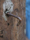Rusty nails in wood. Royalty Free Stock Photos
