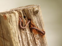 Rusty nails. In wood post isolated Royalty Free Stock Image