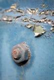 Rusty nut on steel plate, closeup Stock Image