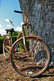 Rusty Old Bike. A rusty old bike leans against an even older huge tree Stock Photo
