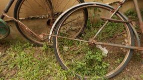 Rusty Bike Wheel in the Garden royalty free stock image