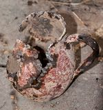 Rusty and old jug, Macro. Photo of still life royalty free stock images