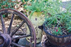 Rusty yellow farm jug used as a planter with a wagon wheel background Royalty Free Stock Images