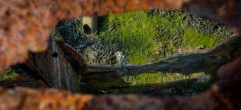 Rusty Porthole Imágenes de archivo libres de regalías