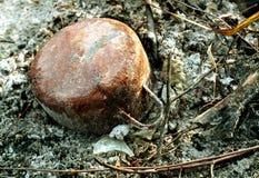 Rusty Pot Lizenzfreie Stockfotografie
