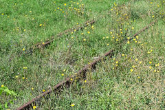 Rusty railway track covered with grass Royalty Free Stock Images